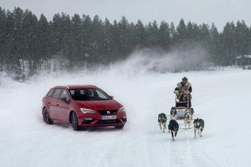 Can Six Huskies Outrun the 300 HP SEAT Leon Cupra?